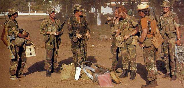 Rhodesian Ridgeback X Staffy